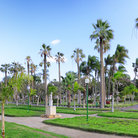 Picture - Palm trees in the Park of Montazah Palace in Alexandria.