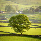 Picture - Green fields in Peak District National Park.