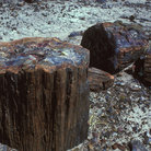 Picture - Logs in the Petrified Forest.