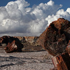 Picture - Stone tree trunks in Petrified Forest National Park.