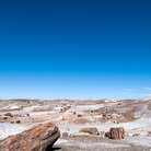 Picture - Tree shaped rocks in Petrified Forest National Park.