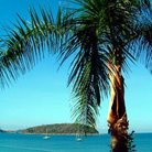 Picture - Palm tree and ocean at Phuket.