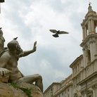 Picture - Bird over Piazza Navona in Rome.