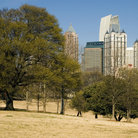Picture - Trees in Piedmont Park in Atlanta.