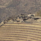 Picture - The hillside ruins above Pisac.