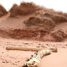 Picture - Sand dunes in Prince Edward Island National Park.