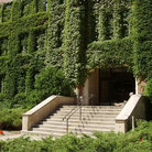 Picture - Ivy covered wall at Princeton University in Princeton.