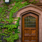 Picture - Wooden door with ivy at Princeton University, New Jersey.