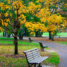 Picture - Boston Public Garden in the fall.
