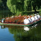 Picture - Swan Boats on the pond in Boston's Public Garden.