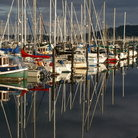 Picture - Colorful sailboats in Puget Sound, Washington.
