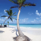 Picture - Palm trees on the beach in Punta Cana.