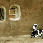 Picture - Goat and building in Khuri, Rajasthan.