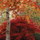 Picture - Autumn at RHS Garden Harlow, Harrogate.
