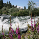 Picture - Rapids on the Rogue River.