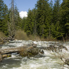 Picture - Rushing river in Rogue River National Forest, Oregon.