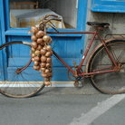 Picture - Bicycle on the street in Roscoff.