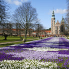Picture - Spring flowers in front of Rosenborg Castle.