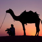 Picture - Man and Camel at Sunset in the Sam Dunes.