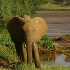 Picture - Elephant, Samburu National Reserve.