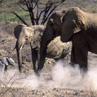 Picture - Elephants at the Shaba National Reserve.