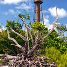Picture - Historic Sanibel lighthouse with root.