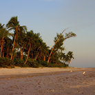 Picture - Beach and palm trees on Sanibel Island.