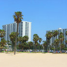 Picture - Palm trees on Santa Monica Beach.