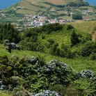 Picture - Fields and country side of Sao Miguel.