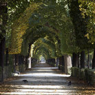 Picture - A tree lined path through a park at Schonbrunn.