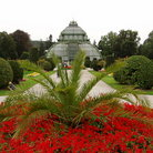 Picture - Foliage and the Palm House in Vienna.