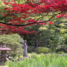 Picture - Fall colors at the Rinoji Temple in Sendai.