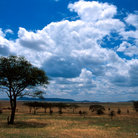 Picture - Clouds over Serengeti National Park.