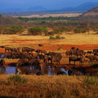 Picture - Landscape of the Serengeti National Park.