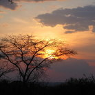 Picture - The sun sets behind trees and clouds in the Serengeti.