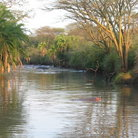 Picture - The banks of a river in the Serengeti.