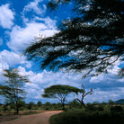 Picture - Road through the serengeti savana.
