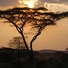Picture - Sunset on Serengeti National Park.