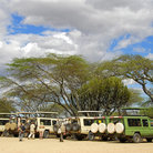 Picture - Wildlife safari vehicles in Serengeti National Park.