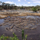 Picture - A hippo pool in Serengeti National Park.