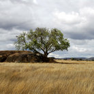 Picture - A kopjes (rock formation) on the plains of Serengeti National Park.