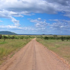 Picture - Dirt track through Serengeti National Park.