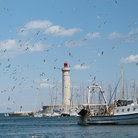 Picture - Seagulls around the lighthouse at Sete.