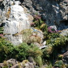 Picture - Flowers on a cliff at Resurrection Bay.
