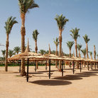 Picture - Palm trees and Parasols on the beach in Sharm el Sheikh.