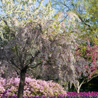 Picture - A colorful spring display of flowers at Sherwood Gardens in Baltimore.