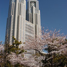 Picture - Modern building and cherry blossoms in Shinjuku.