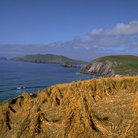 Picture - Slea Head and Blasket Islands in County Kerry.