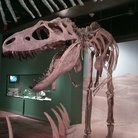 Picture - Dinosaur Gallery at the South Carolina State Museum in Columbia.