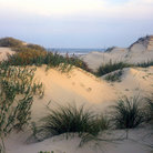 Picture - Sand dunes on South Padre Island, Texas.